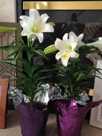 Easter Lilies in memory of Kyleigh